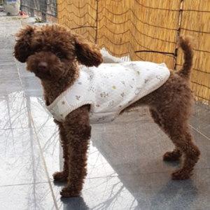 봄여름 신상 초특가~ /강아지옷/애견옷/고양이옷